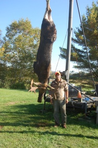 Moose hanging