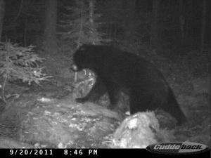 Close Bear