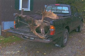 Moose in Truck