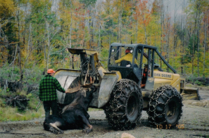 Towing Moose with Skidder